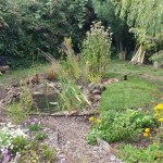 Bog garden and pond completed in Bristol