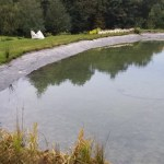 Commercial aquatic planting plans
