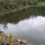 Commercial pond design