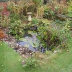 WIldlife pond Bristol