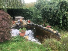 Etang jardin