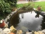 Lagunage étang