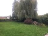 Pelouse automne