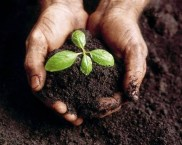 compost-organique-plante