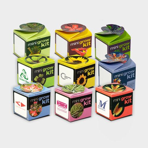 Tiny Terracotta Cube - Promotional Flower Set