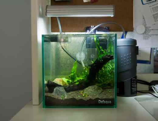 aquarium biologische filtratie