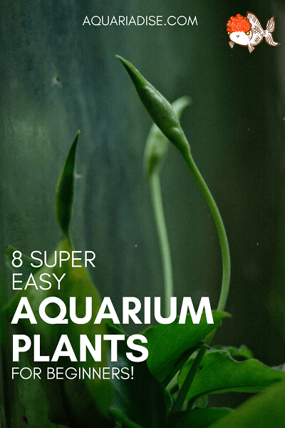 Easy Floating Aquarium Plants