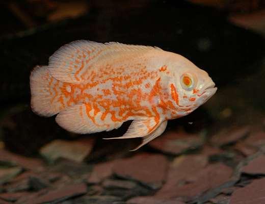 stocking aquarium