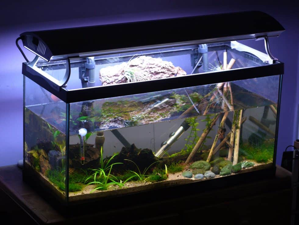 aquarium thermometer