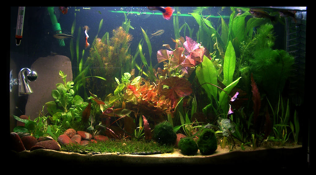 plentyof fish grow fast