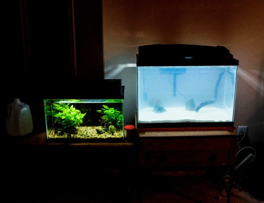 cloudy aquarium water