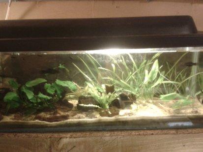Molly tank