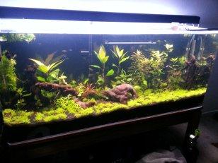 4.23.13 aquarium