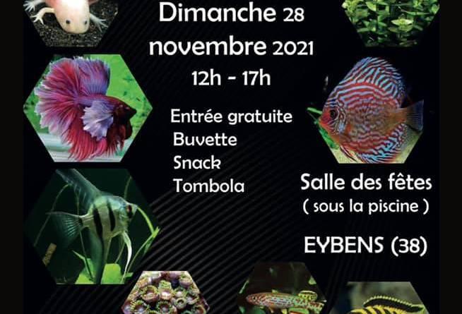 5ème Bourse aux poissons d'aquarium Eybens