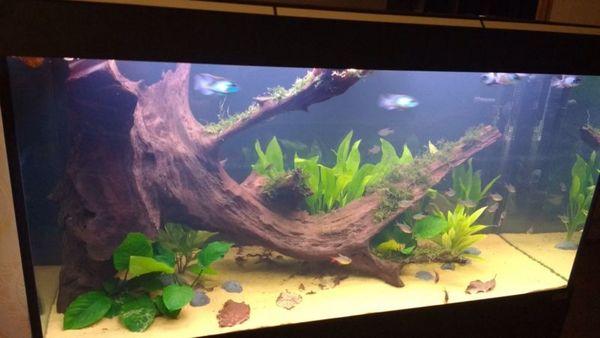 Big Fish Ponds Sale