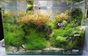 Aquariumtypen: Aquascape