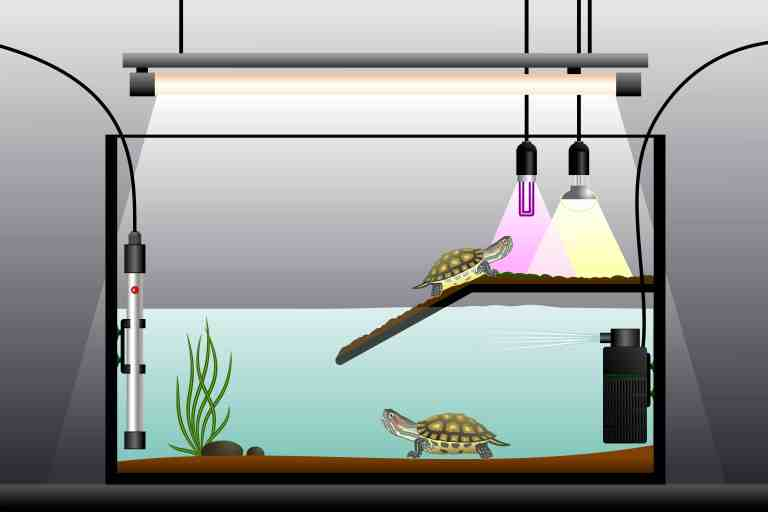 Best Filter for Turtle Tank set-up