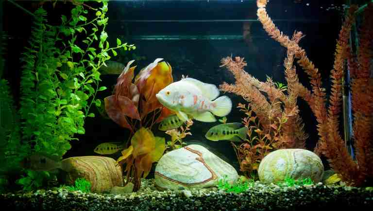 Aquarium using best hob filter