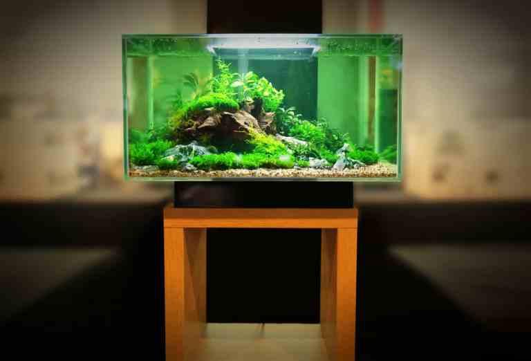 Using the best LED aquarium lighting for plants