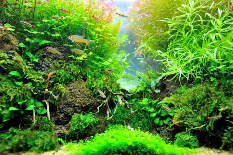 Planted tank using the best aquarium plant fertilizer