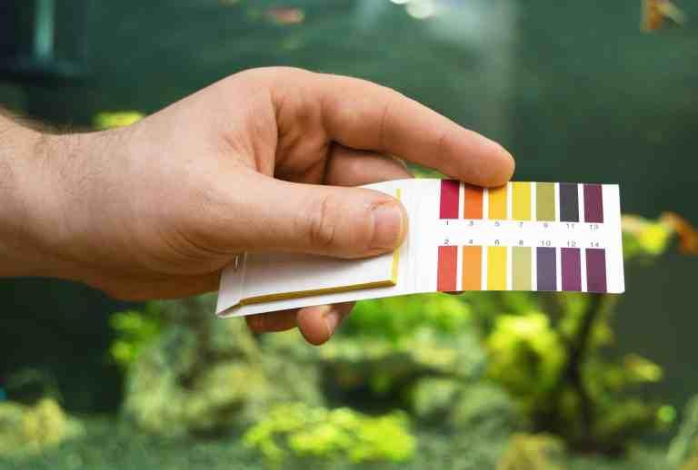 Using the best aquarium test kit for your tank