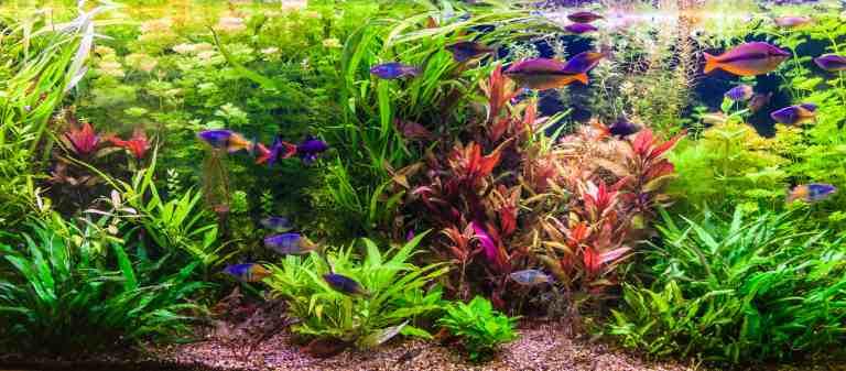 Planted tank flourishing because of the best aquarium plant fertilizer