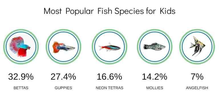 fish tanks for kids survey - most popular fish species