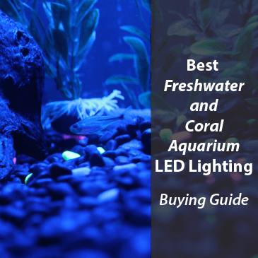 Best Freshwater and Coral Aquarium LED Lighting 2021