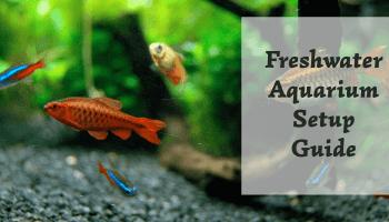 Taking Care of Betta Fish Fins - Aquarium Guide
