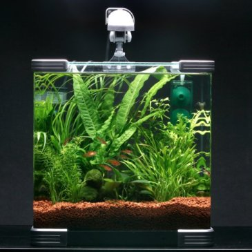 Top 5 Fish for Nano Aquariums