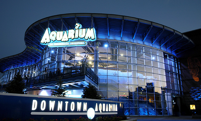 Image result for downtown aquarium denver