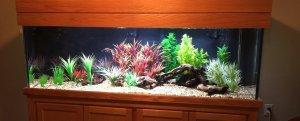 Freshwater 125 gallon Aquarium