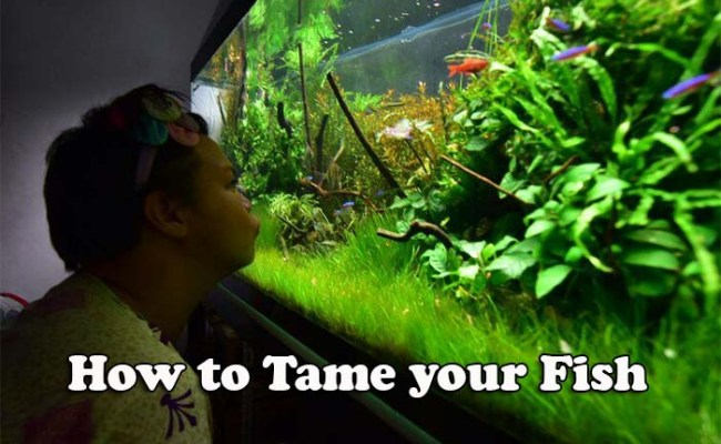 How To Tame Your Fish