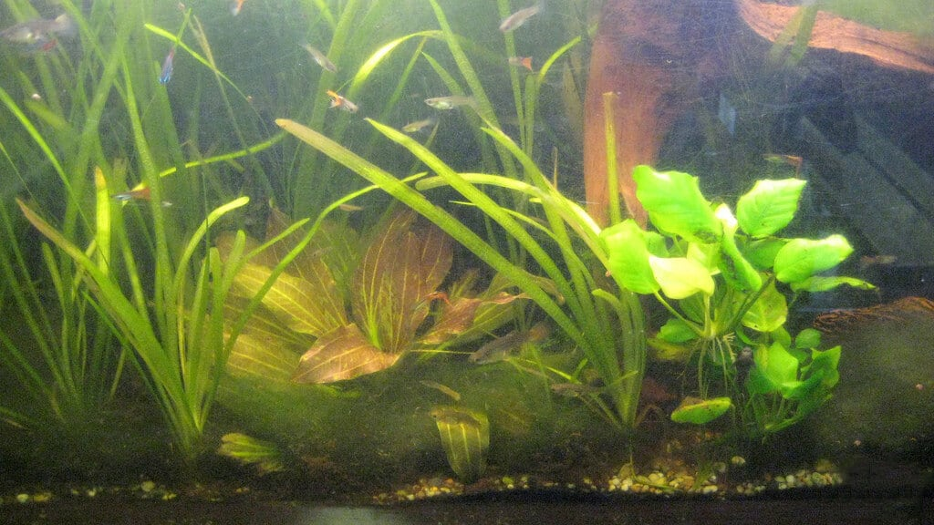 Why Is My Fish Tank Cloudy?