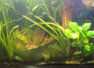reasons why your fish tank is cloudy