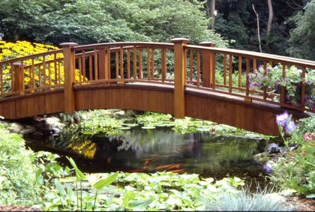Backyard Pond Plants And Fish