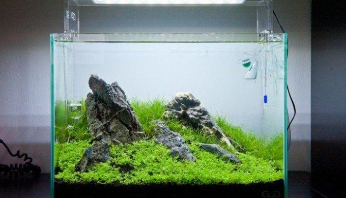 Nano Aquarium Led Verlichting | Imageview.co