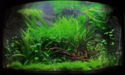 Aquascaping World Competition - Gallery - Trigon Island by ...
