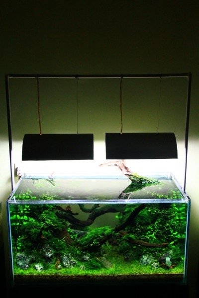 Aquascaping World Competition - Gallery