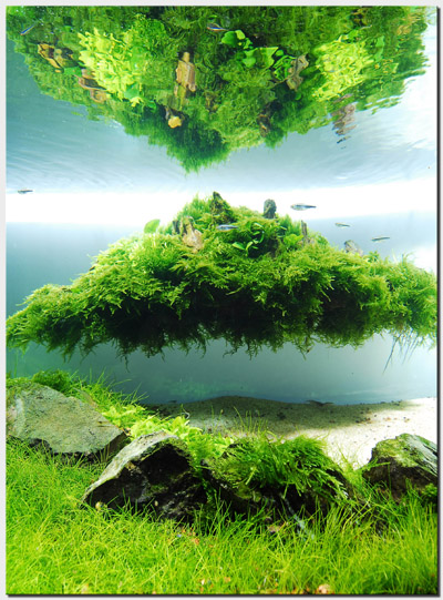 Aquascape of the Month August 2010: