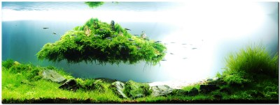 Floating Island - The Planted Tank Forum
