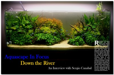 Aquascape in Focus: Down the River | AquaScaping World Forum