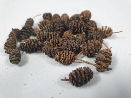 alder cones