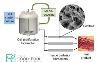 The Process of Cellular Agriculture