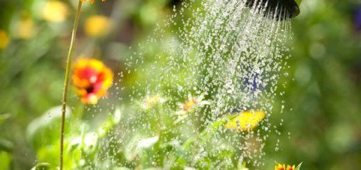Economiser l'eau avec l'eau de pluie