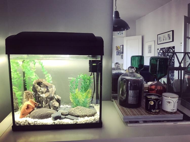 El acuario como elemento decorativo en tu hogar