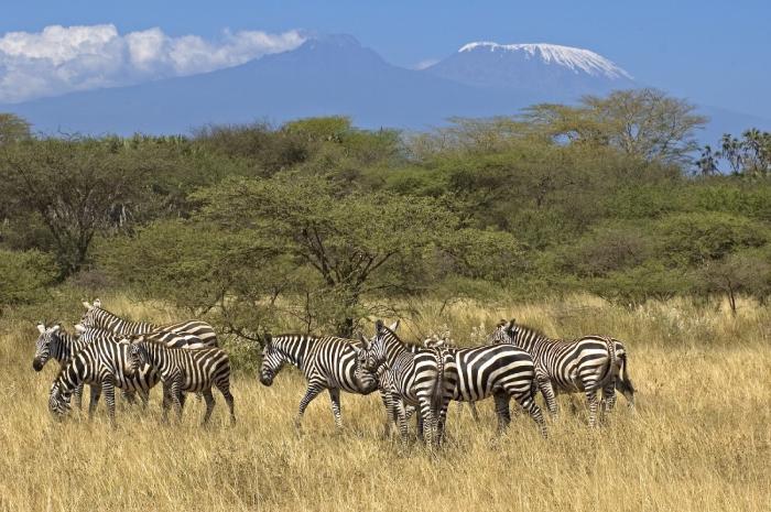 اكتشاف سفاري كينيا