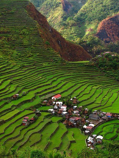 مصاطب أرز باناوي الأثرية