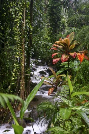 غابات هاواي