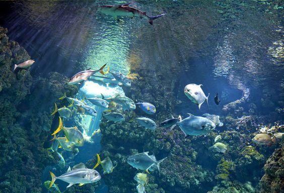 حوض السمك الاستوائي